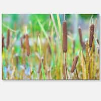 The Reeds - Landscape Photography Glossy Metal Wall Art