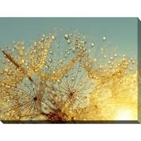 """Dewy dandelion flower at sunrise close up Full"" Giclee Print Canvas Wall Art"
