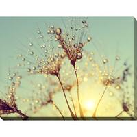 """""""Dewy dandelion flower at sunset close up Full A"""" Giclee Print Canvas Wall Art"""