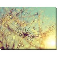 """""""Dewy dandelion flower at sunset close up Full"""" Giclee Print Canvas Wall Art"""