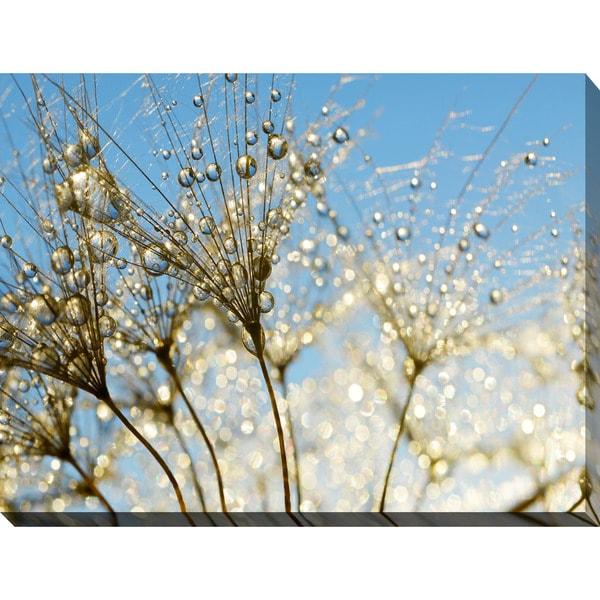 """Dewy dandelion flower close up Full"" Giclee Print Canvas Wall Art"