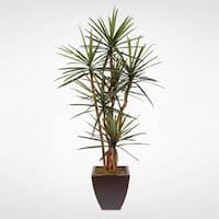Artificial Yucca Tree with Natural Wood Trunks in a Metal Container