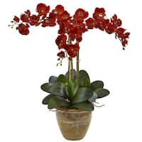 Nearly Natural Triple Stem Phalaenopsis Seasonal Arrangement
