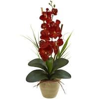 Seasonal Phalaenopsis Orchid Arrangement