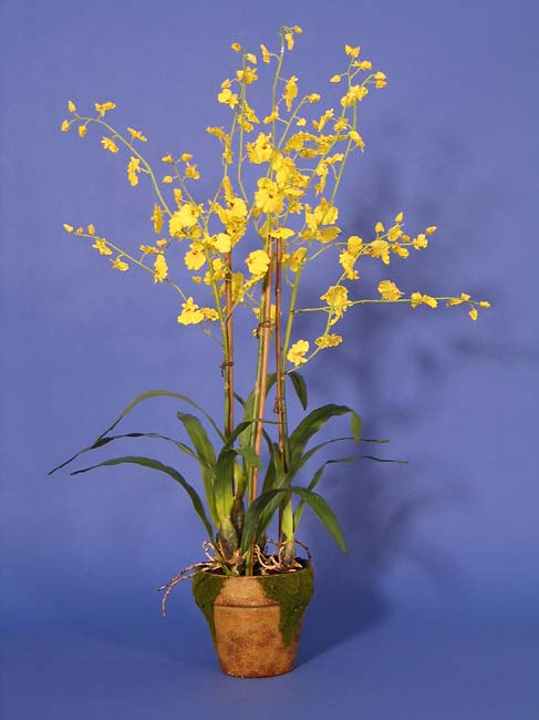 Dancing Lady Orchid With Moss Pot 942689 Overstock Com Shopping Great Deals On Nearly
