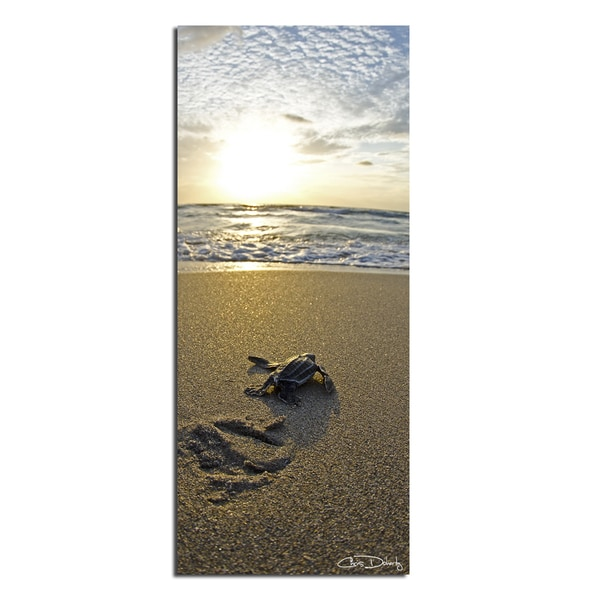 Christopher Doherty Baby Sea Turtle Canvas Wall Art