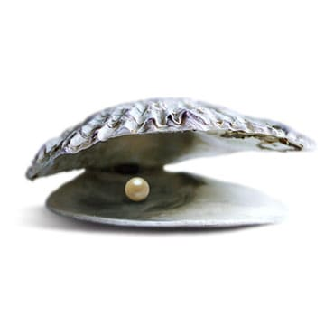 Oyster shell with a white pearl on a white background.