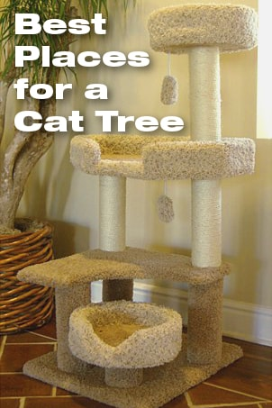 Best Places For A Cat Tree Overstock