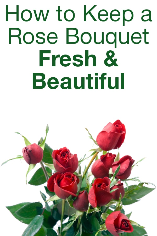 How To Keep A Rose Bouquet Fresh And Beautiful Overstock