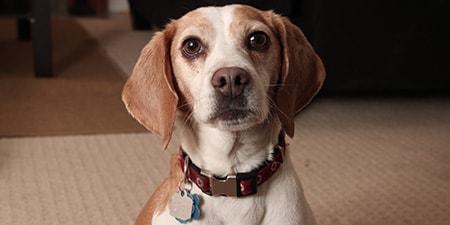 adopted dog max