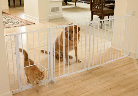 dog and cat at a pet gate