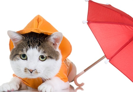 cat with raincoat and umbrella