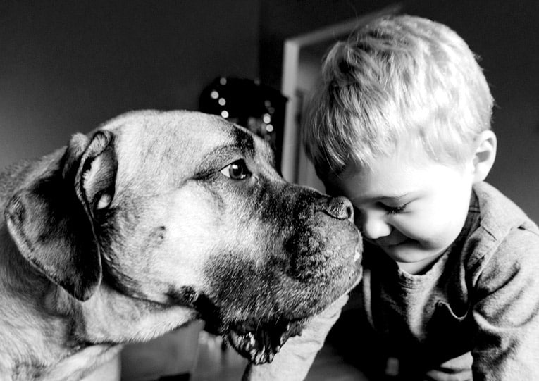 large dog with boy