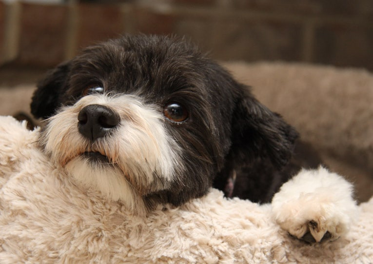 Best Pets For Apartment Dwellers