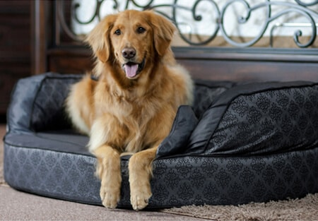 dog on a pet bed